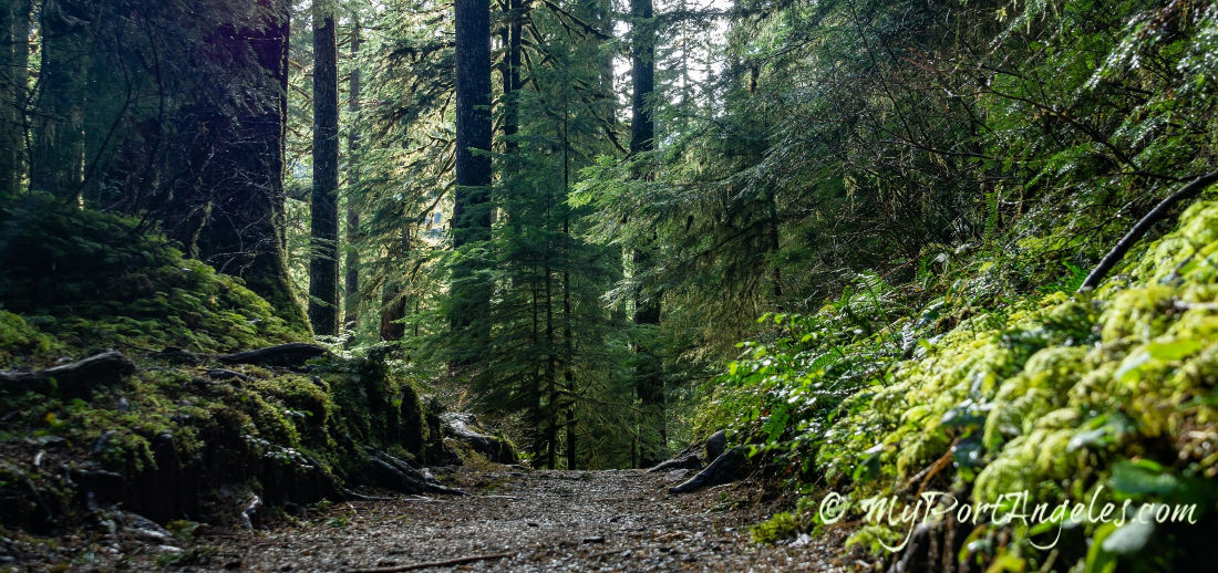 Trail to Sol Duc Falls, in the Olympic National Park.